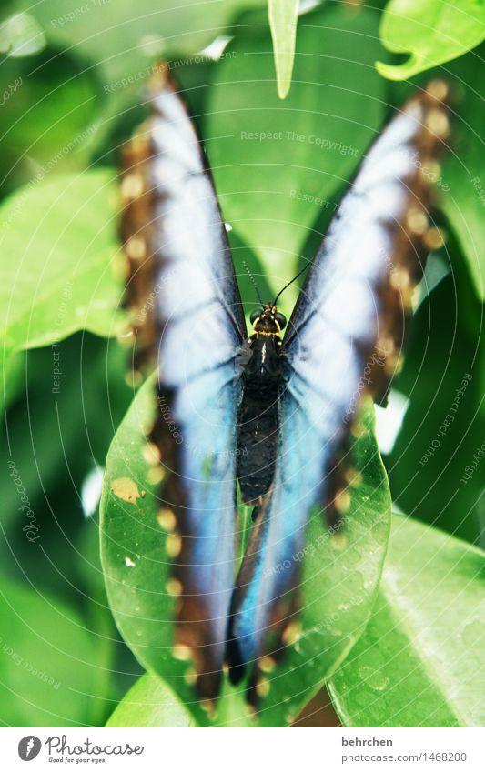 einblick Natur Pflanze blau schön grün Sommer Baum Erholung Blatt Tier Frühling Wiese außergewöhnlich Garten fliegen Park