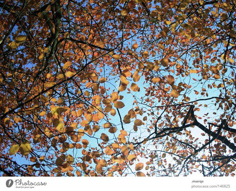 Disarrangement rund Oval Blatt Baum welk Herbst Geäst Pflanze Färbung durcheinander Vergänglichkeit Ast blau Zweig Natur orange Himmel blätterdecke