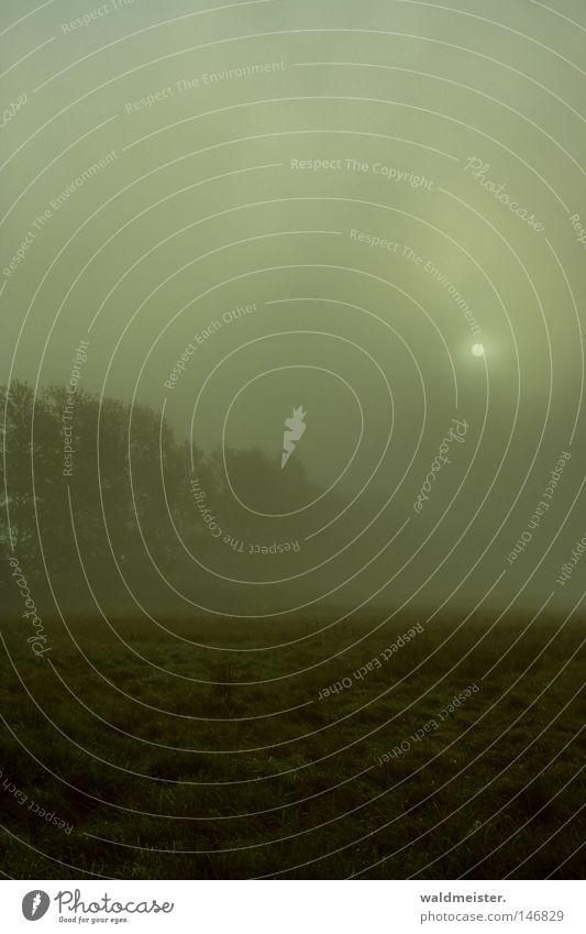 Morgennebel Natur Baum Sonne grün Wald Herbst Wiese Feld Nebel Romantik Gemälde mystisch Märchen unheimlich trüb Textfreiraum