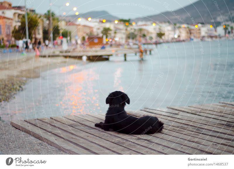 In vier Tagen... Hund Sommer Meer Tier Strand Küste liegen leuchten Steg Altstadt Kleinstadt Türkei Promenade Fischerdorf Straßenhund Ägäis