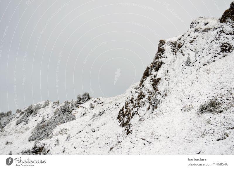 Über der Schneefallgrenze Himmel Natur weiß Baum Erholung Landschaft Ferne schwarz Berge u. Gebirge kalt Schnee Freiheit Felsen Freizeit & Hobby Erde wandern