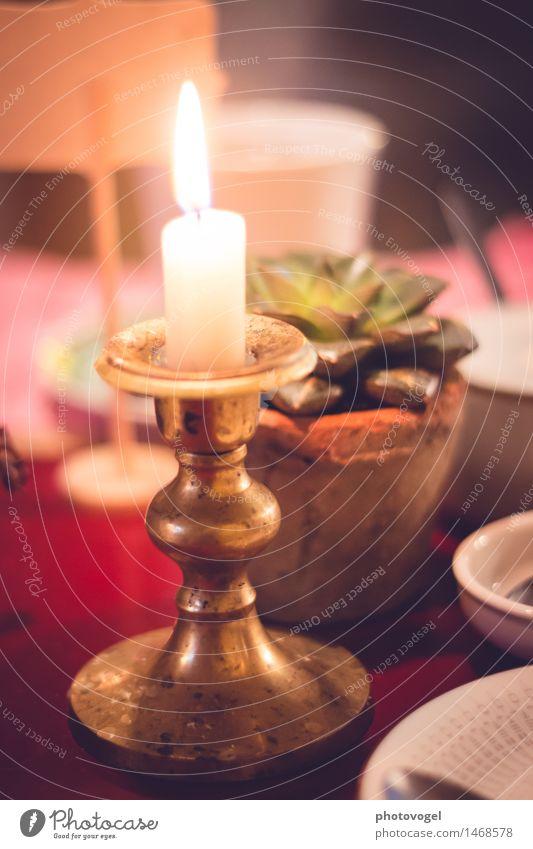 bei Kerzenschein Pflanze weiß Blume Erholung rot ruhig Gefühle hell Zufriedenheit leuchten gold Feuer Kerze Gelassenheit Geschirr Teller