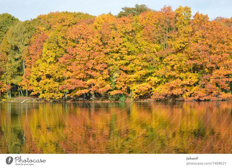 Herbst färbt Wasserreflexion Natur Landschaft Baum Wald Seeufer braun mehrfarbig gelb gold grün orange Farbfoto Außenaufnahme Morgen
