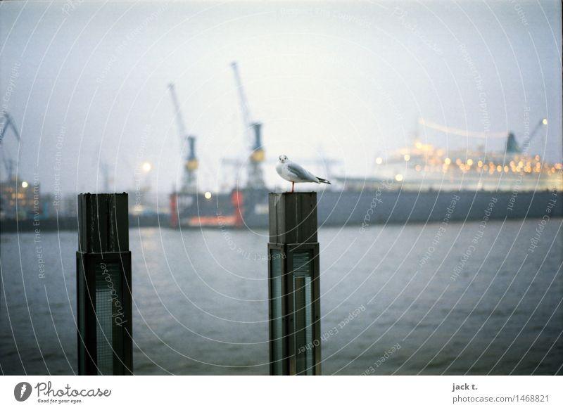 Hafen Wasser Nebel Hafenstadt Vogel ruhig Möwe Farbfoto Außenaufnahme Morgen Blick