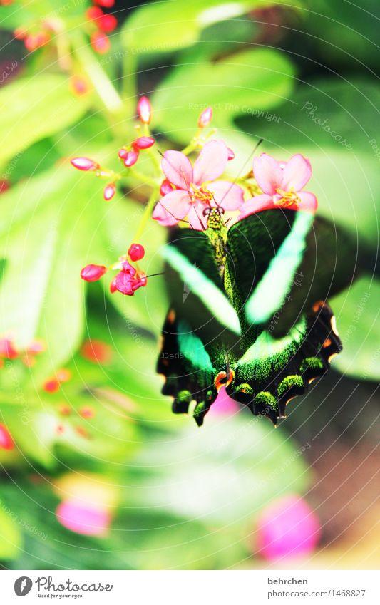 grün auf grün Natur Pflanze Tier Frühling Sommer Blume Blatt Blüte Garten Park Wiese Wildtier Schmetterling Tiergesicht Flügel Facettenauge 1 beobachten Blühend