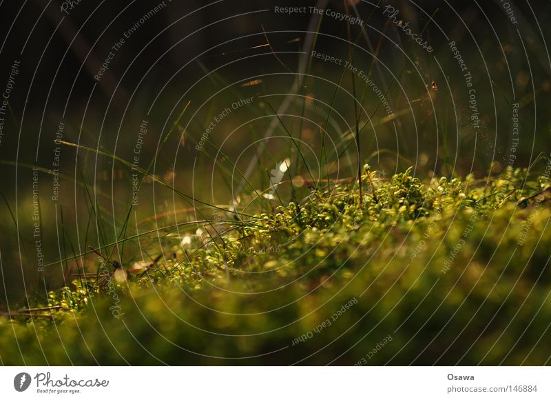 Dreier grün Pflanze Umwelt dunkel Herbst Gras klein Park weich Tiefenschärfe Lebensraum Waldboden pflanzlich