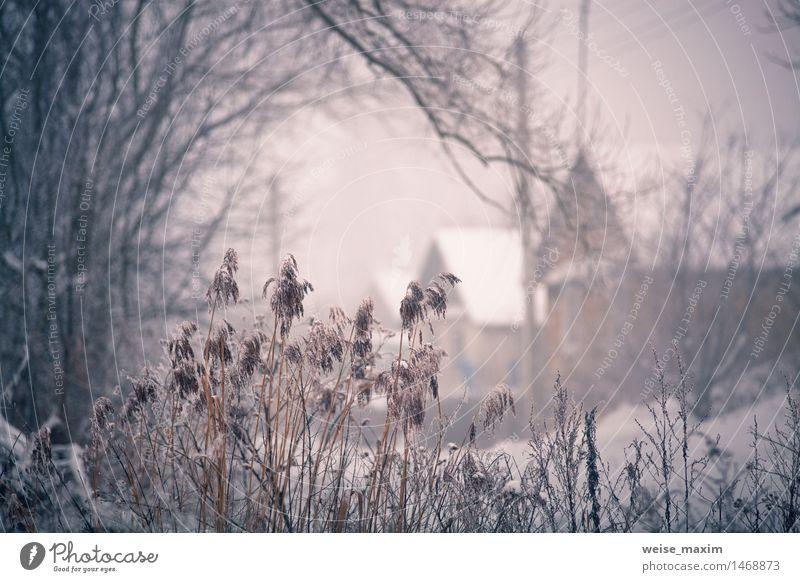 Schnee und Winter. Belarus-Dorf, Landschaft im Winter Ferien & Urlaub & Reisen Tourismus Haus Natur Pflanze Nebel Baum Gras Sträucher Garten Wiese Feld Wald
