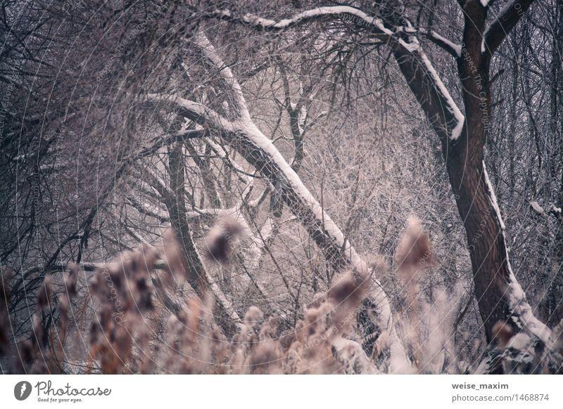 Natur Pflanze schön Wasser weiß Baum Landschaft Blatt Winter Wald Gras Schnee Schneefall Park Nebel Sträucher