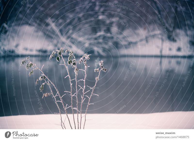 Schnee und Winter. Landschaft im Winter Natur blau Wasser weiß Baum Wiese Gras Feld Eis Nebel Sträucher Fluss Frost