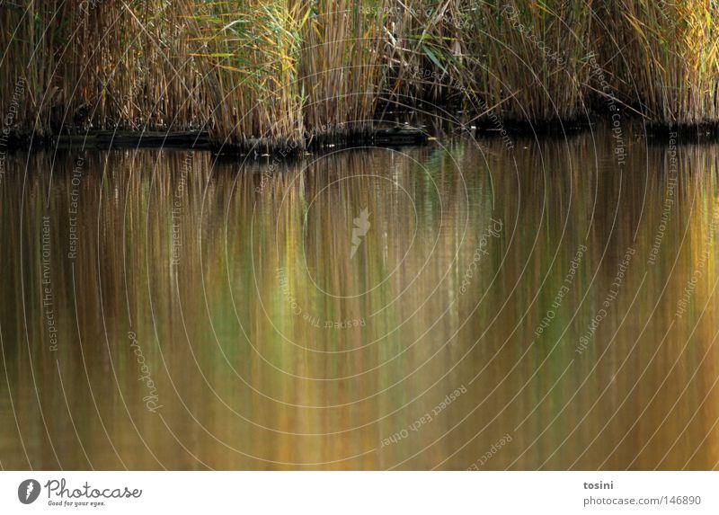 Verschwommenes Grün Wasser grün gelb Gras See dreckig nass Amerika Schilfrohr Seeufer Halm Teich Flussufer unklar trüb