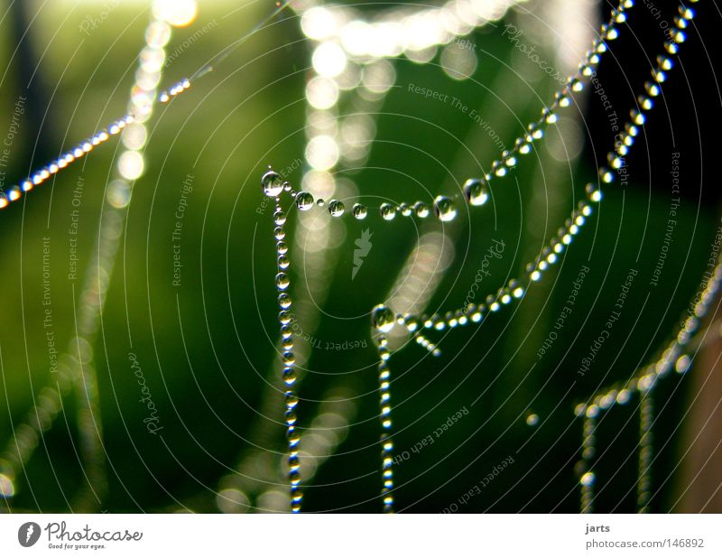 Abendkleid schön Sonne Herbst Wassertropfen Netz Schmuck Tau Kette Spinnennetz Perlenkette Indian Summer