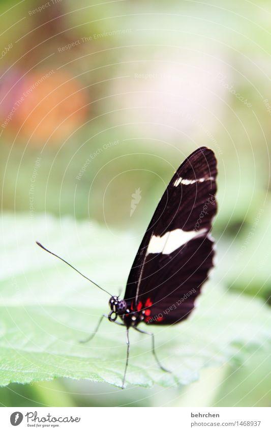 einzigartig Natur Pflanze Tier Baum Sträucher Blatt Garten Park Wiese Wildtier Schmetterling Tiergesicht Flügel 1 beobachten fliegen Fressen außergewöhnlich