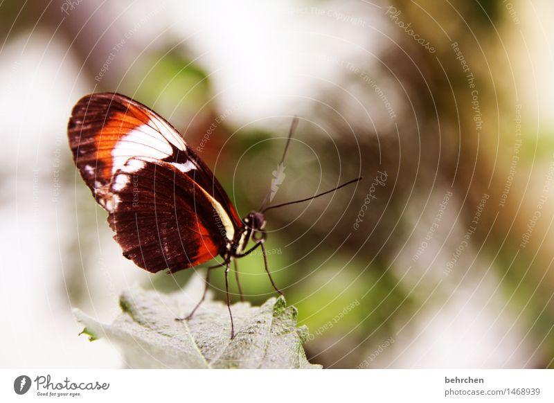 abwarten Natur Pflanze schön Sommer Baum Erholung Blatt Tier Frühling Wiese klein Beine außergewöhnlich Garten fliegen Park