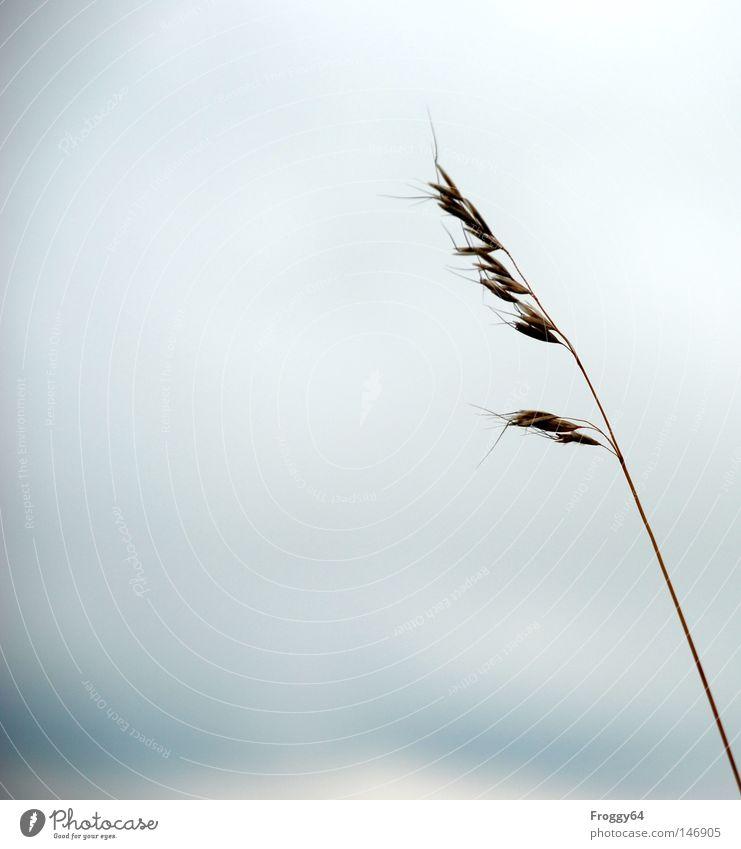 Einsam Himmel Wolken Erholung Wiese Blüte Gras wandern Wind laufen Verkehr Pause Sturm Stengel Samen Beeren Ähren