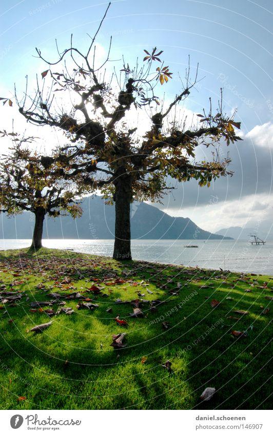 Herbst 8 Baum Blatt See Berge u. Gebirge Schweiz Vierwaldstätter See Farbe Platane Zweige u. Äste Baumstamm Jahreszeiten Licht gelb orange braun grün Seeufer