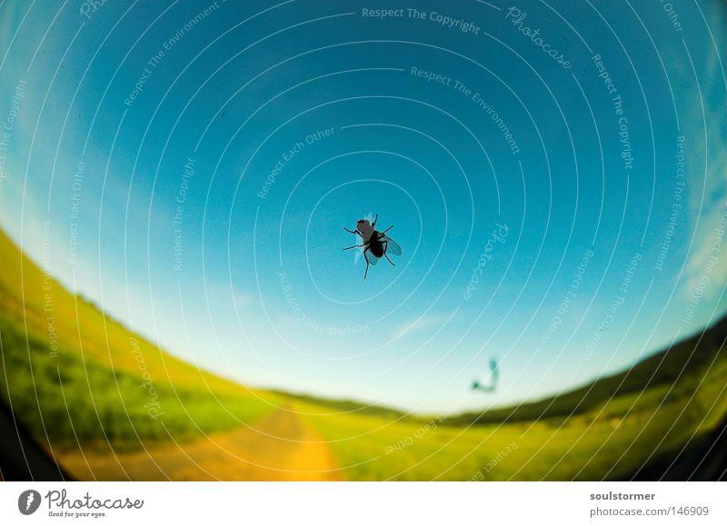 Fussel, Fliege, Scheibe, Himmel Himmel grün blau Sommer gelb Ferne Straße Erholung Freiheit PKW dreckig Fliege fliegen frei KFZ fahren