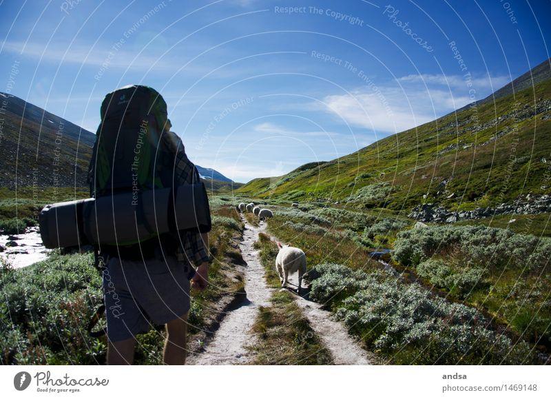 ein paar Schafe. Himmel Natur Pflanze Sommer Landschaft Wolken Tier Ferne Berge u. Gebirge Wiese Wege & Pfade Gras gehen Felsen Erde wandern