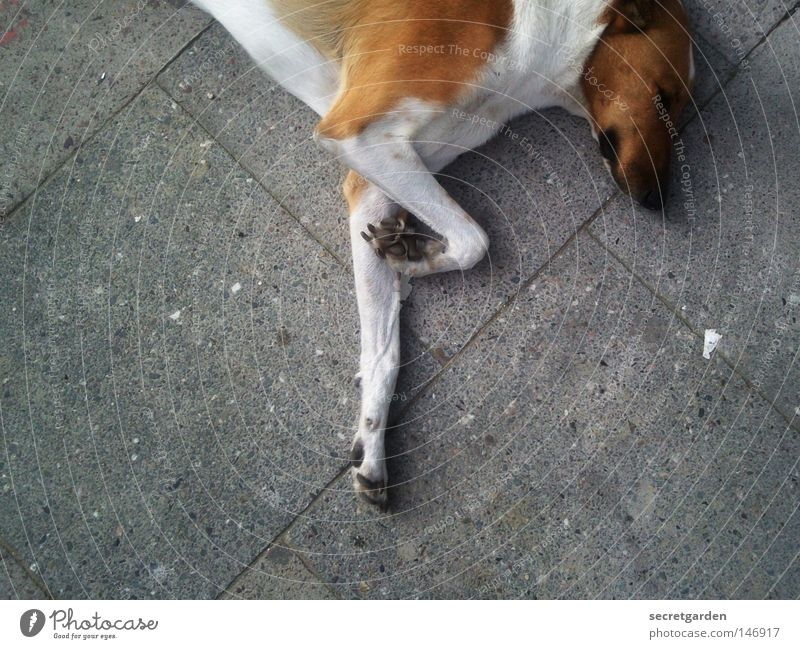ballerina dog Hund Stadt weiß Erholung Einsamkeit Tier Straße Traurigkeit grau braun Fuß oben Zusammensein liegen 2 Zufriedenheit