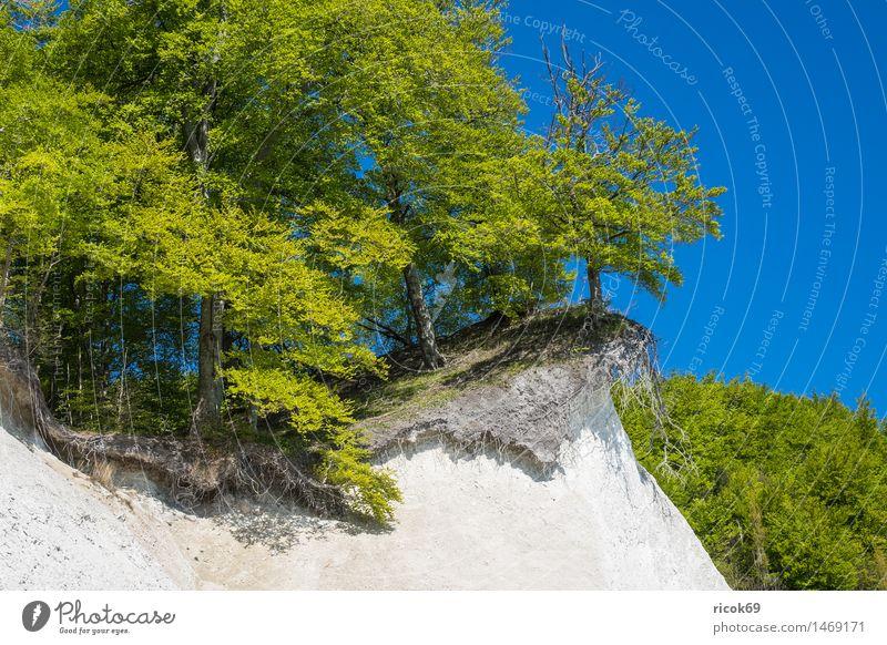 Ostseeküste auf der Insel Rügen Erholung Ferien & Urlaub & Reisen Natur Landschaft Wolkenloser Himmel Schönes Wetter Baum Felsen Küste Sehenswürdigkeit blau