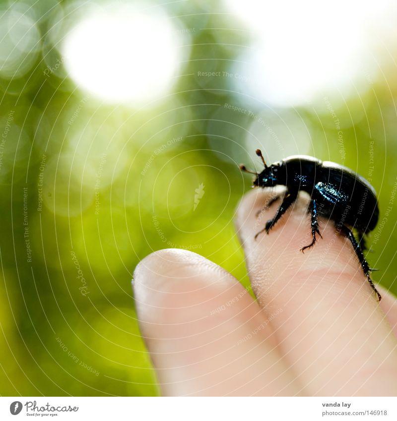 Mist! Mensch Natur Hand schwarz Tier Angst Umwelt Finger Macht nah Insekt berühren Biene Käfer Fühler krabbeln
