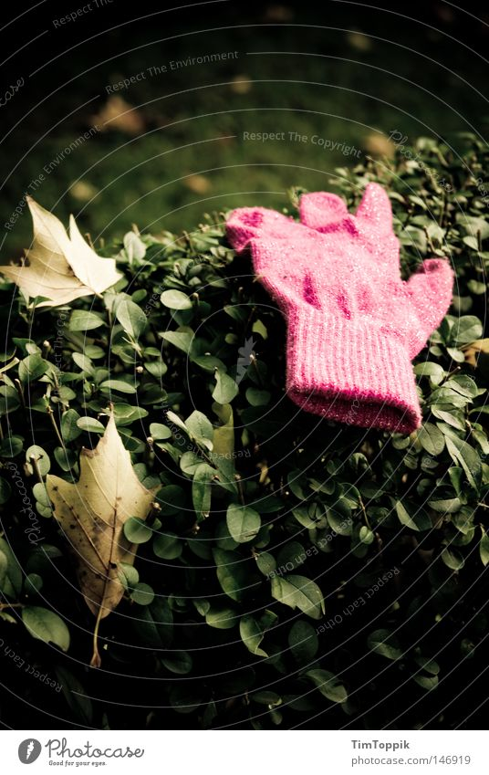 Herbstfund Blatt kalt Garten Park Wärme glänzend rosa Bekleidung Spaziergang Physik verloren Hecke Handschuhe finden verlieren