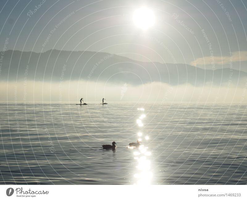 sup Wohlgefühl Sport Wassersport Surfbrett Mensch 2 Himmel Wolken Sonne Wetter Schönes Wetter Seeufer Zürich See Verkehrsmittel Verkehrswege Ruderboot Tier