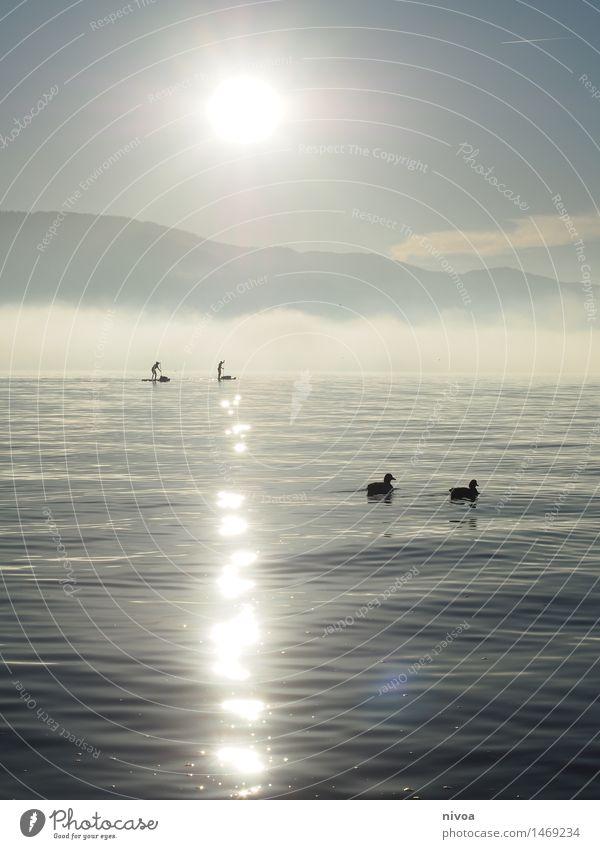 SUP II Mensch blau Wasser Sonne Erholung Tier Küste Sport Lifestyle See Vogel glänzend Wetter Freizeit & Hobby Wellen stehen