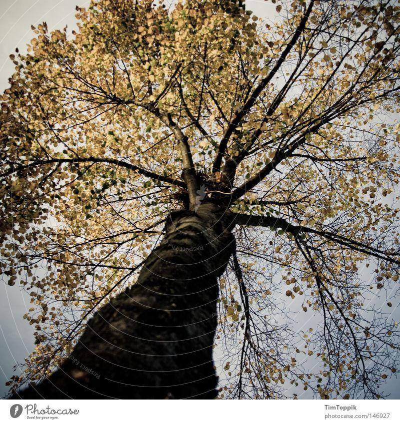 Mein Freund, der Baum Baumstamm Geäst Zweige u. Äste Blatt Herbst Jahreszeiten Natur Umwelt ökologisch Umweltschutz Wald Laubbaum