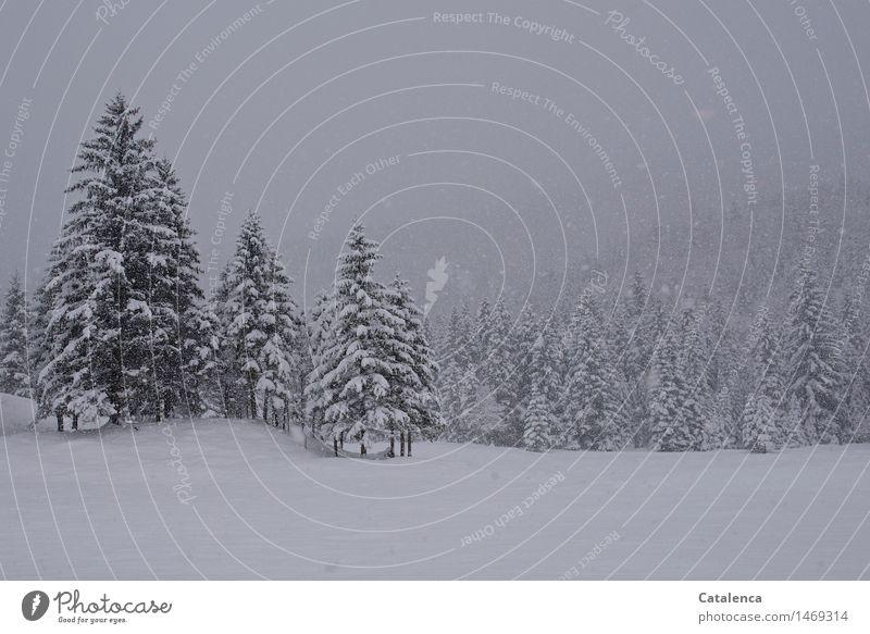 Schneefall Natur Ferien & Urlaub & Reisen Pflanze weiß Landschaft Wolken Winter Wald Berge u. Gebirge kalt Umwelt Wiese grau Eis