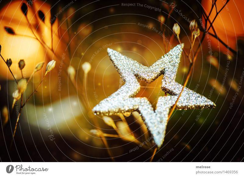 silbern leuchtend Weihnachten & Advent Pflanze schön Winter Gefühle Stil Feste & Feiern braun Stimmung Design orange glänzend leuchten Dekoration & Verzierung elegant gold