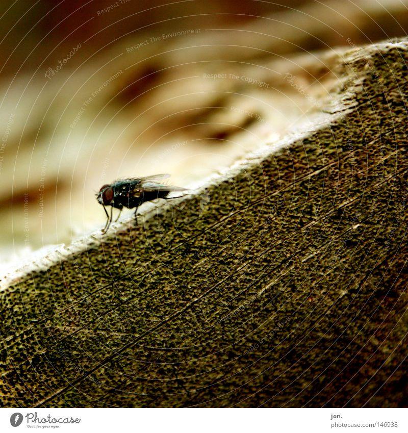Fly Baum Tier Herbst Holz klein fliegen Fliege Flügel Insekt Jahreszeiten Baumstamm krabbeln Oktober