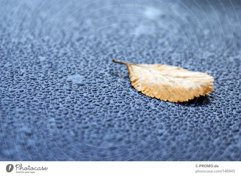 Ruhe Wasser blau ruhig Blatt Herbst braun Wassertropfen liegen Vergänglichkeit