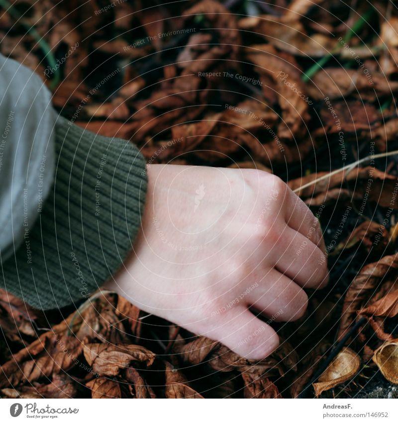 Kastanien sammeln I Hand Blatt Herbst Suche Finger Boden Bodenbelag Jacke Sammlung heben Kastanienbaum Kastanie ungemütlich herbstlich beseitigen Kastanienblatt