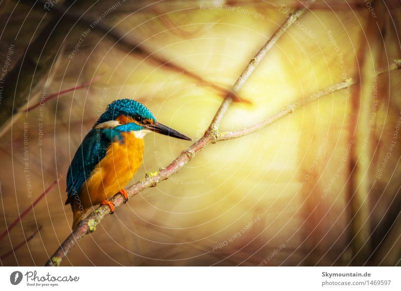 Eisiger Sonnenaufgang Natur Pflanze blau Sommer Baum Tier Winter Berge u. Gebirge Umwelt Herbst Frühling Küste See Vogel orange Wetter