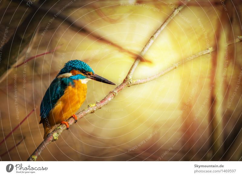 Eisiger Sonnenaufgang Umwelt Natur Pflanze Tier Frühling Sommer Herbst Winter Wetter Schönes Wetter Baum Wildpflanze Berge u. Gebirge Küste Seeufer Flussufer