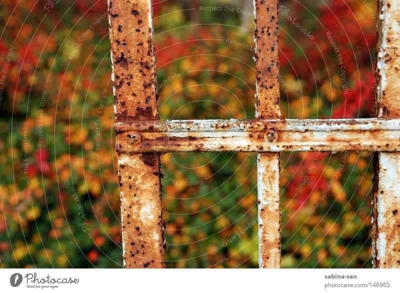 Herbstrost Natur weiß rot Herbst braun Rost Halt abblättern Oxidation