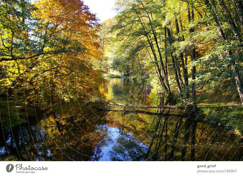 natur pur Herbst Licht Reflexion & Spiegelung Baum mehrfarbig Blatt fließen ruhig fällen Fluss Bach Wasser Baumstamm Wege & Pfade Natur Schatten Idylle