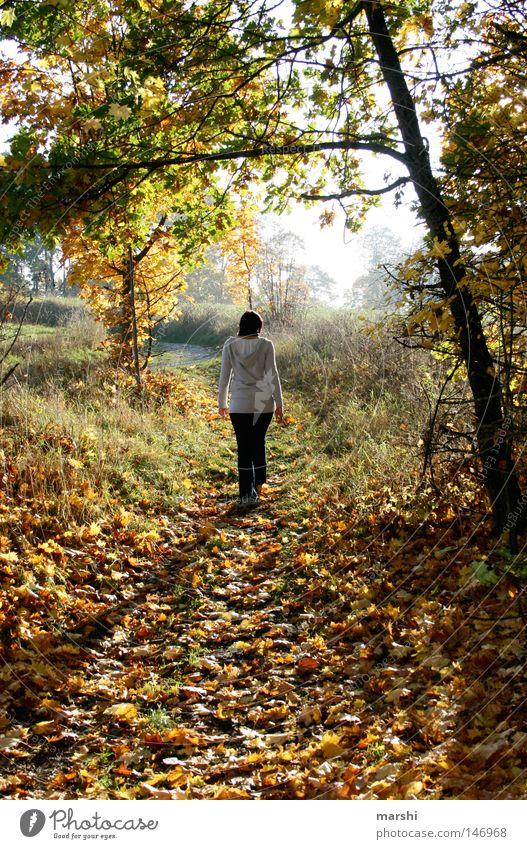 Herbststimmung Blatt Baum Sonnenstrahlen Spaziergang gehen Licht Stimmung Gefühle herbstlich fallen walk walking Schatten