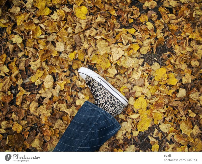 Bittersweet October Blatt Einsamkeit Herbst Fuß Schuhe Beine Jeanshose liegen fallen