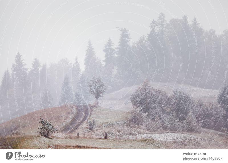 Schneefälle in Bergen. Wechsel der Jahreszeiten. Winter kommt Himmel Natur Ferien & Urlaub & Reisen grün schön Baum Landschaft Ferne Berge u. Gebirge gelb