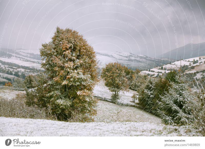 Schneefälle in Bergen. Schnee auf einem grünen Baum. Ferien & Urlaub & Reisen Tourismus Winter Berge u. Gebirge Garten Natur Landschaft Himmel Wolken Herbst