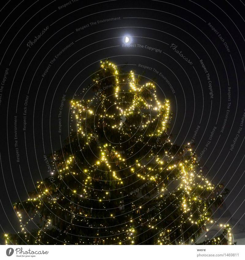 Weihnachtsbaumkerzenspitzenglanz Ferien & Urlaub & Reisen Wasser ruhig Küste außergewöhnlich See glänzend Tourismus Nebel Teich Bayern Tourist Gewässer Bodensee