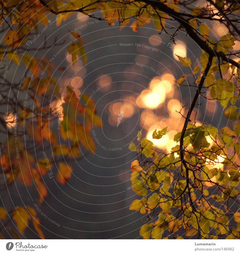 Herbstwärme schön Baum Sonne ruhig Blatt Wärme Beleuchtung glänzend gold Frieden Physik Ast Vergänglichkeit Abschied Zweig