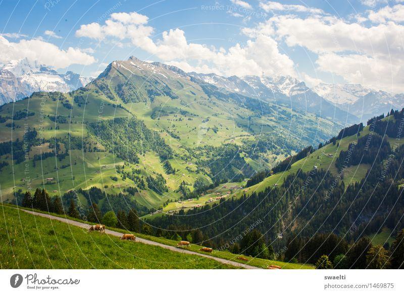 Idylle Natur Landschaft Himmel Wolken Frühling Schönes Wetter Gras Wiese Wald Hügel Alpen Berge u. Gebirge Gipfel Farbfoto Außenaufnahme Menschenleer Tag Licht