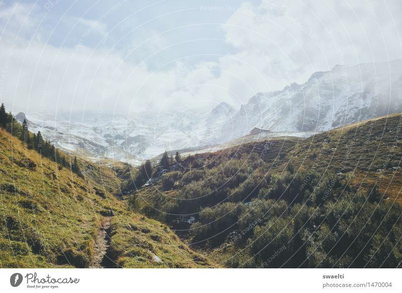 Weg zum Schnee Natur Landschaft Erde Himmel Wolken Sommer Baum Gras Sträucher Wiese Wald Hügel Felsen Alpen Berge u. Gebirge Gipfel Schneebedeckte Gipfel
