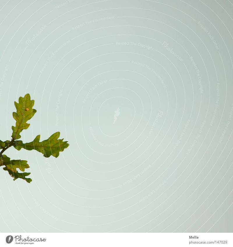 Wo geht's hier zum Herbst? Himmel Baum grün blau Sommer Blatt Ast Zweig Eiche minimalistisch Freiraum vorwitzig