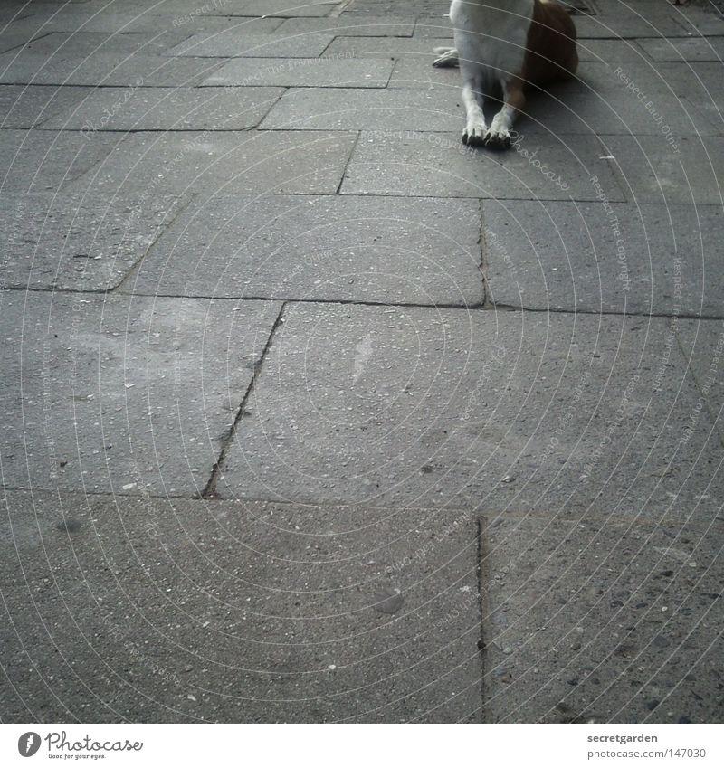 egyptian dog Hund Stadt weiß Erholung Einsamkeit Tier Winter dunkel Straße Traurigkeit grau braun Fuß oben Zusammensein liegen