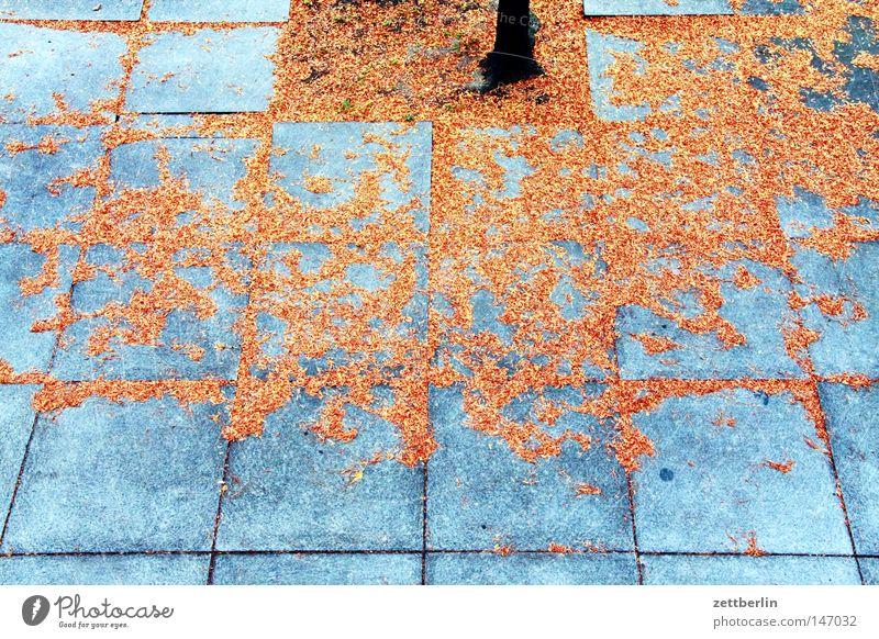 Wie herrrrrlich ists doch im Herbst... Herbstlaub Blatt fallen gold Blattgrün Hof Platz Bürgersteig Fuge Baum Baumstamm Pflanze Vergänglichkeit goldener herbst