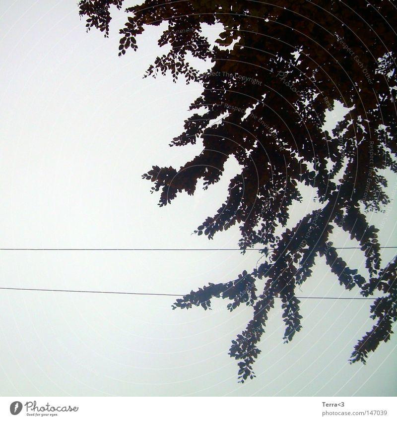 Kabelbaum ! Himmel Baum Blatt Wolken schwarz dunkel kalt Herbst grau Traurigkeit Linie nass Elektrizität trist Kabel Trauer