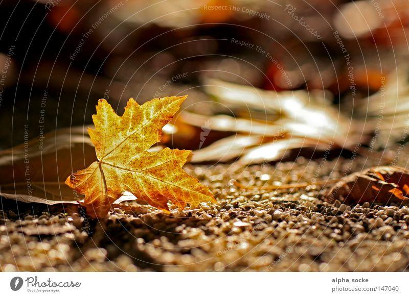 Goldener Oktober Herbst Blatt gold Stimmung Baum braun schön